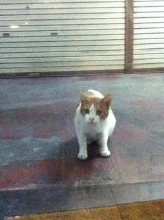 日曜日の猫.jpg
